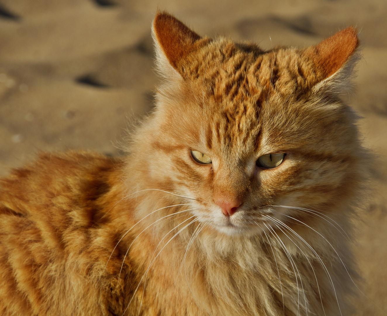 Strandkatze Portrait