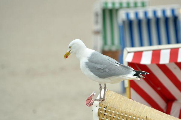 Strandkorbwächter