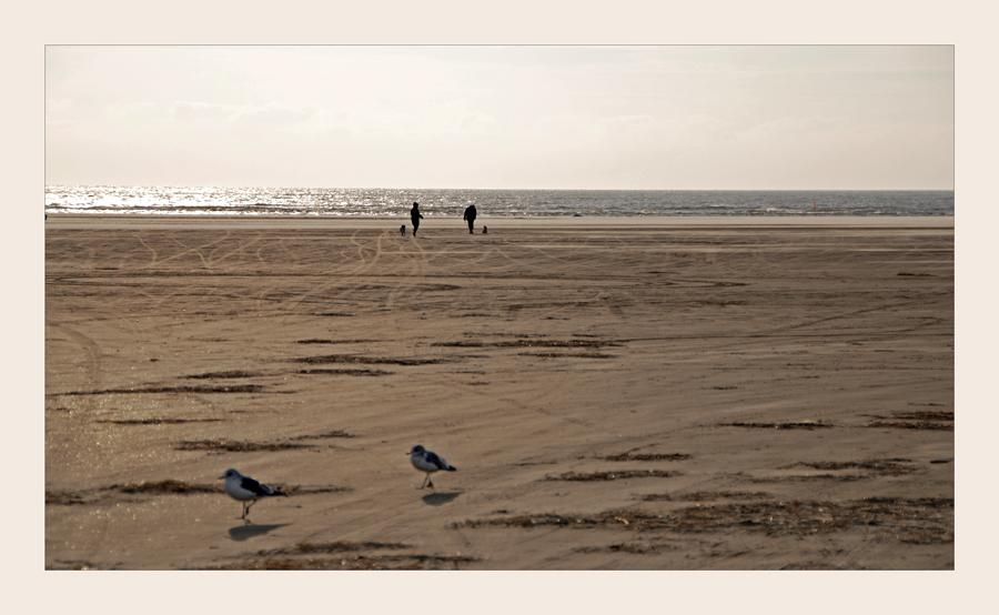 Strandläufer 2