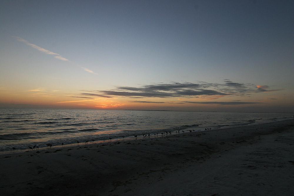 Strandläufer am Abend