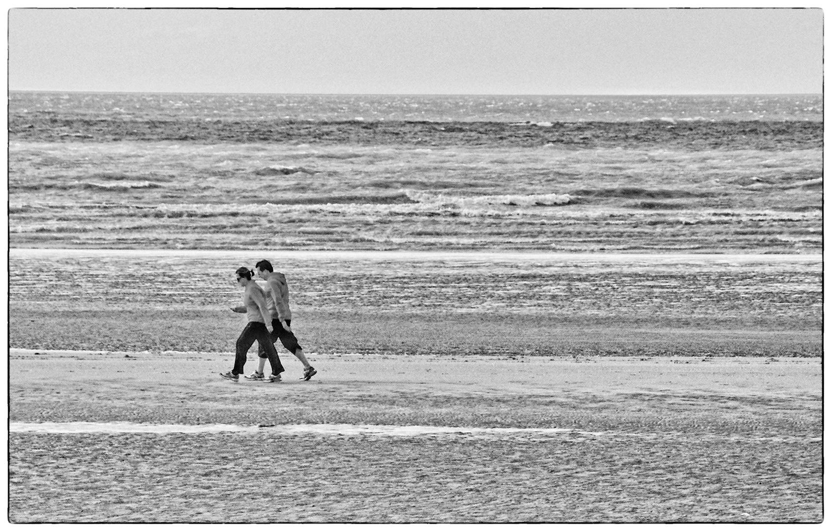 Strandläufer - Coureurs de plage