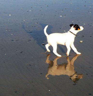 Strandläufer II