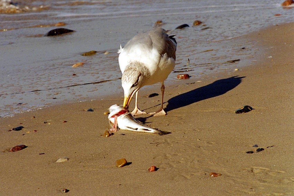 Strandmahlzeit