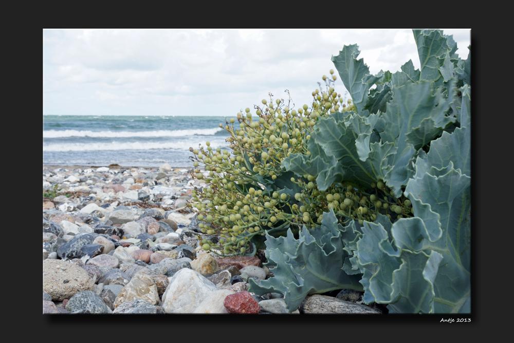 Strandpflanzen 1