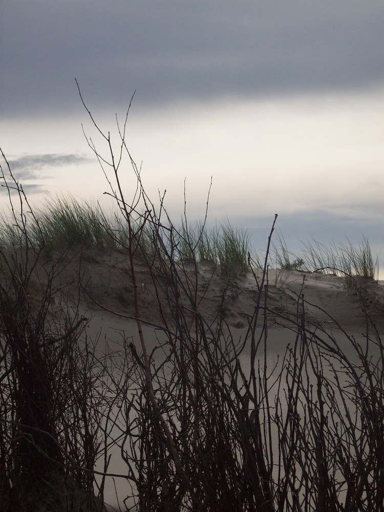 Strandreisig