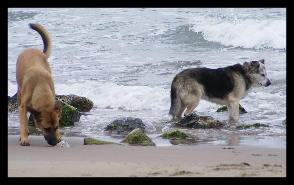 Strandsaison für Hunde