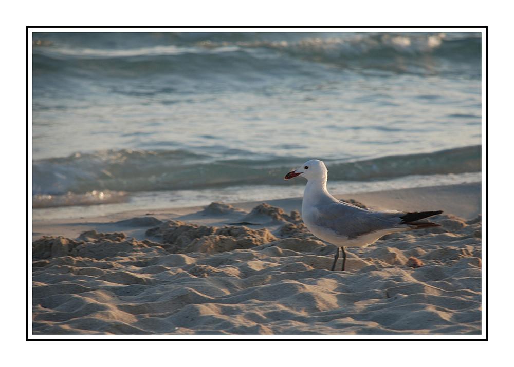 Strandschönheit...