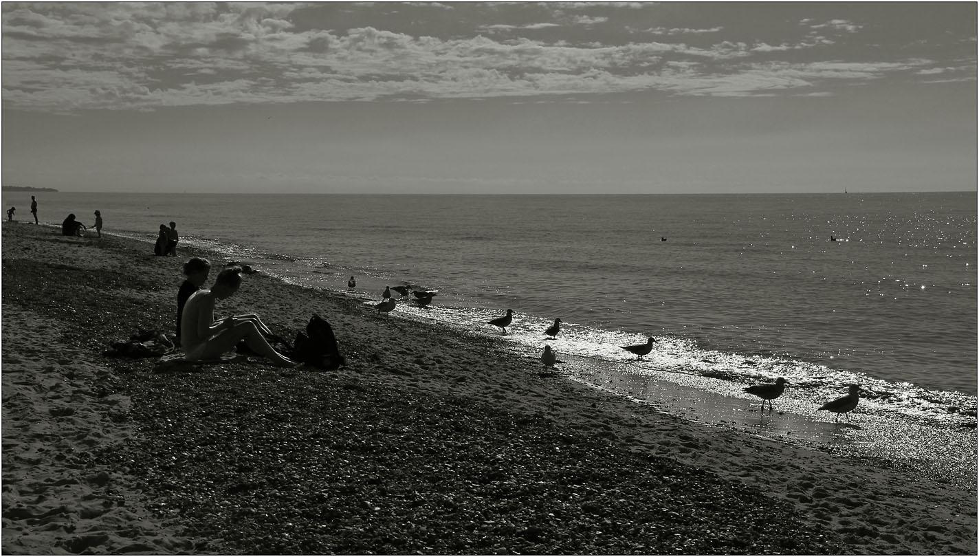 Strandsitzer und Strandläufer ...
