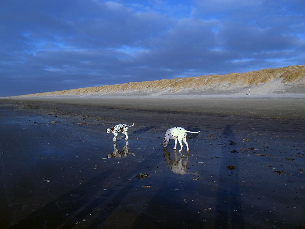Strandspaziergang bei Ebbe an der Nordsee mit den Hunden