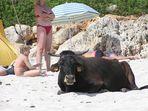 Strandurlaub auf Mallorca