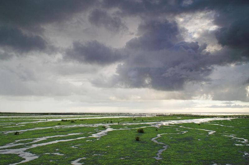 Strandwiesen im Regen