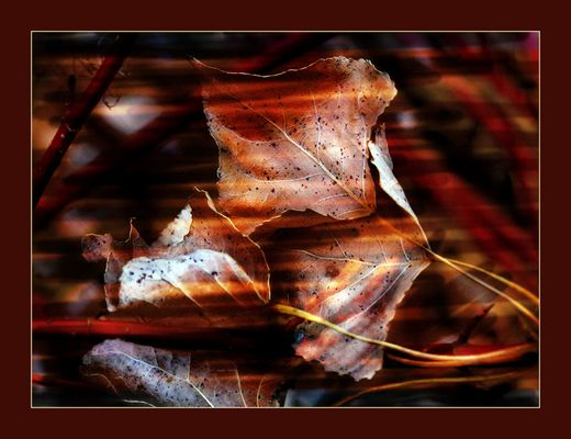 Strane foglie
