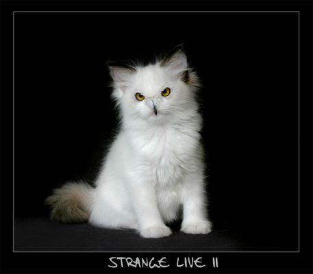 -- Strange Live II -- [reload]