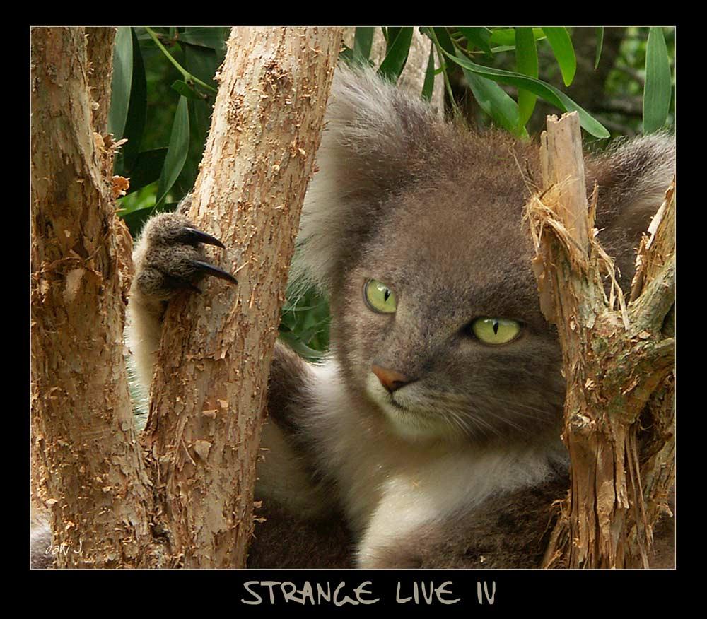 -- Strange Live IV --