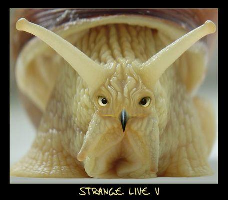 -- Strange Live V --