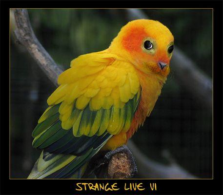 -- Strange Live VI --