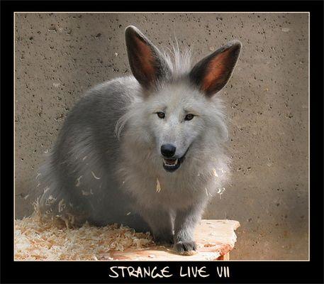 -- Strange Live VII --