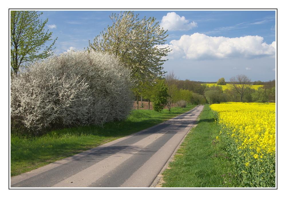 Straße des Frühlings