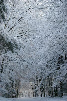 Straße im Wald in Ahausen