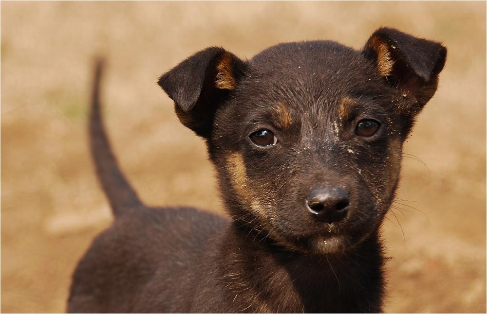 Strassen - Hund - Baby
