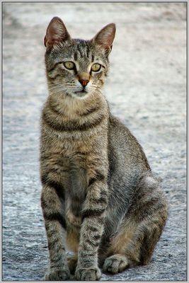 Straßen Katze