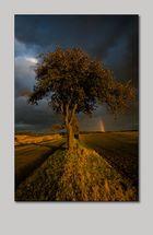 Straßenbaum 02