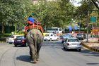 Strassenbild in Delhi