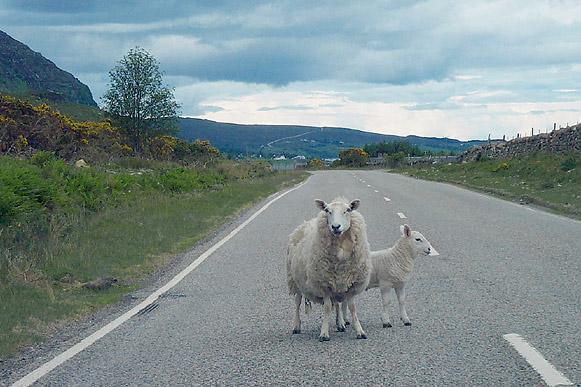 Straßenblockade auf Schottisch!