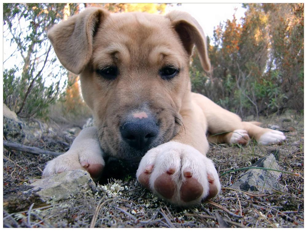 """strassenhund """"bruno"""""""