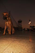 Strassenhunde Hurghada 2008 III.