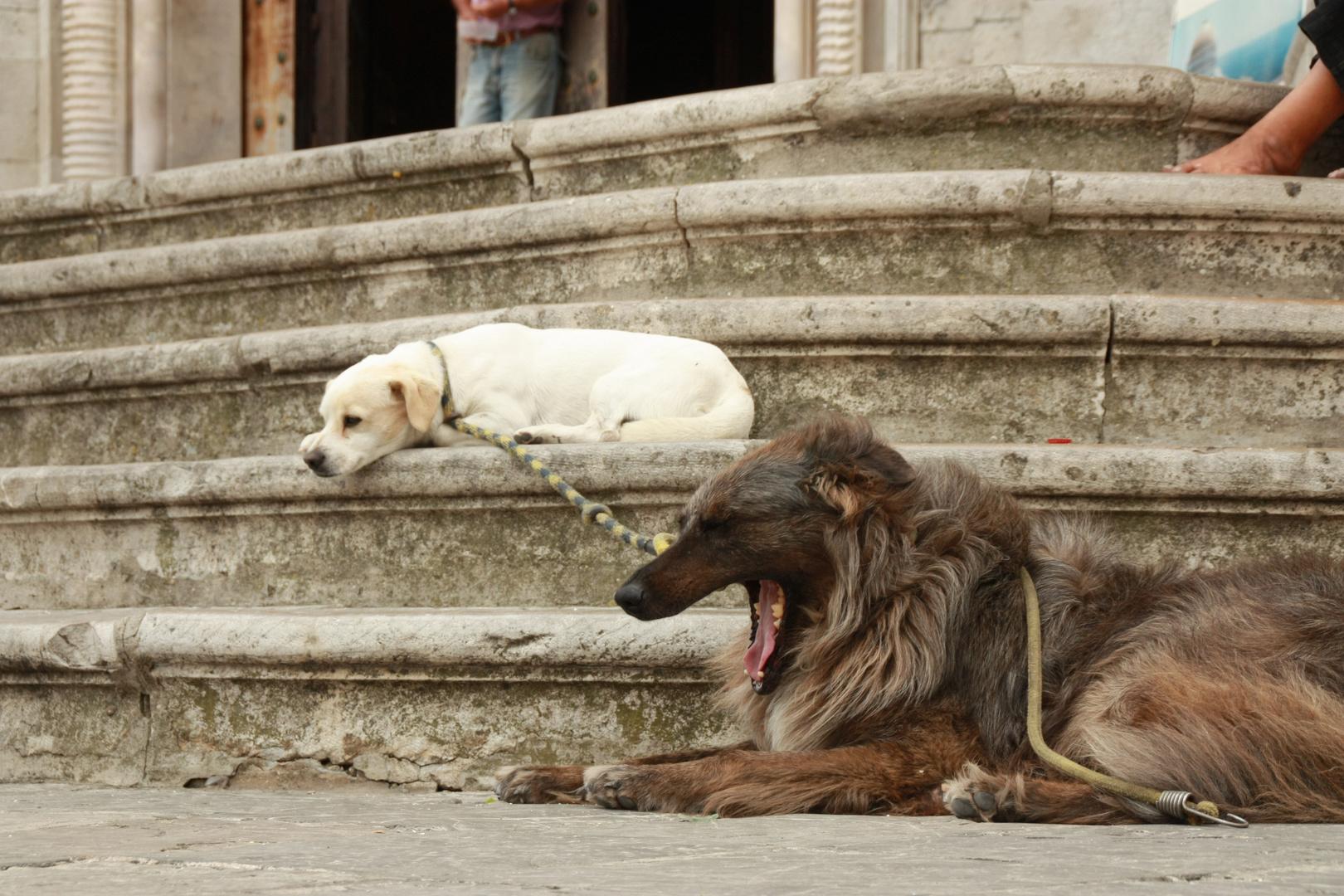 Straßenhunde in Cádiz