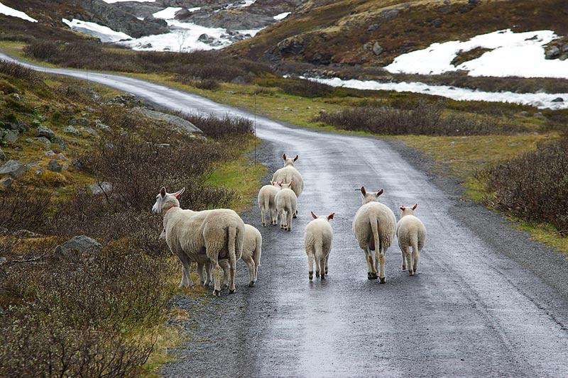 Straßenkreuzer in Norwegen