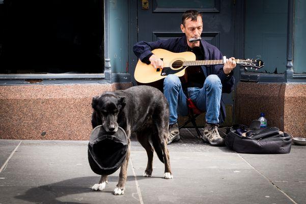 Straßenmusiker und Hund in Glasgow