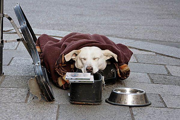 Strassenmusikhund