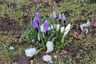 Straßenrand Frühling 20 März 2013