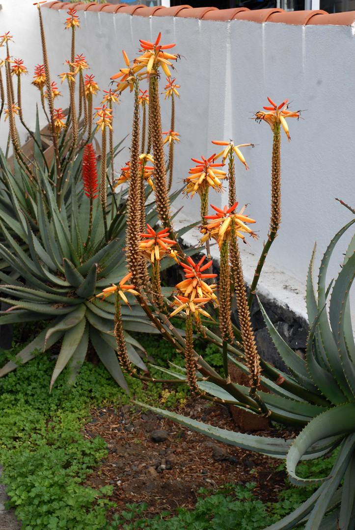 Strassenrandpflanzen
