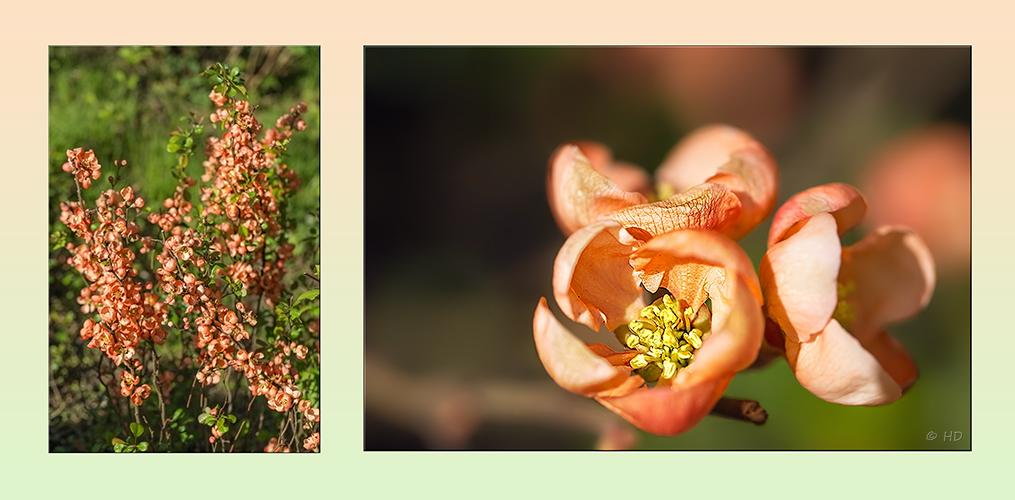 Strauch & Blüte