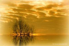 Strauchwerk ...... im Sonnenaufgang