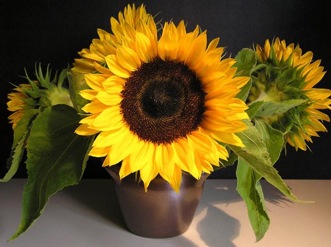 Strauß von Sonnenblumen II