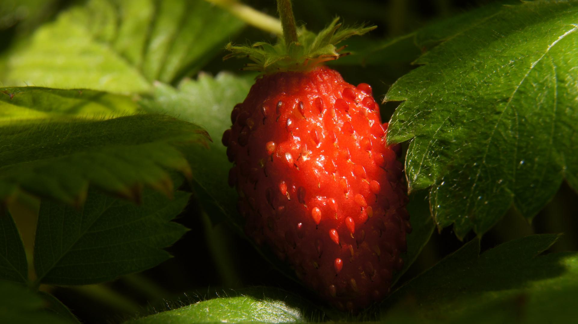 Strawberry - mich findet keiner