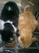 Stray cats named 'Moher tiger' and 'Steppenwolf'.