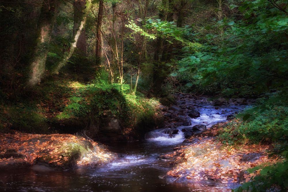 Stream running into Lake Vyrnwy