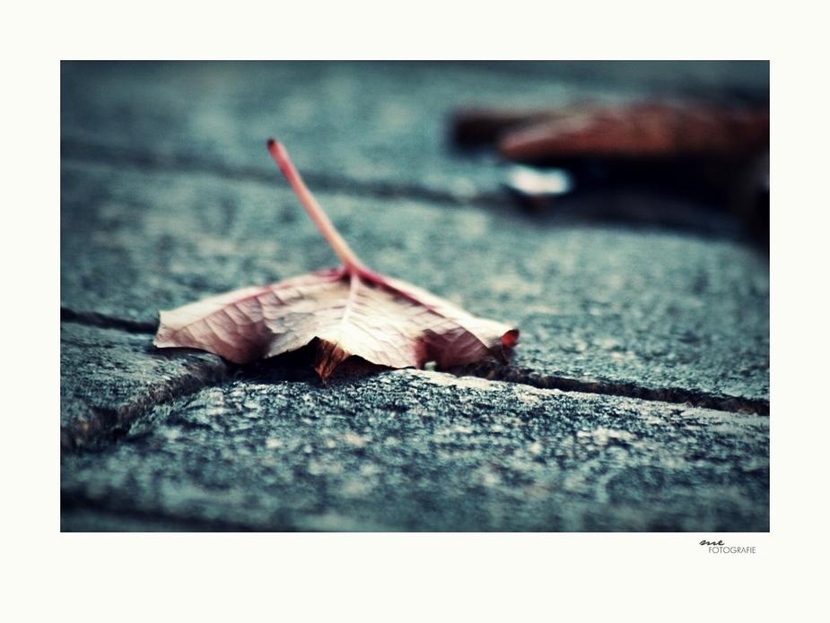 .street.