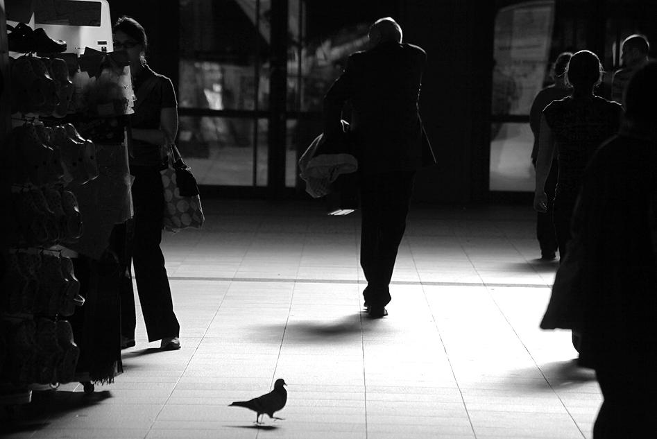 Street Dove