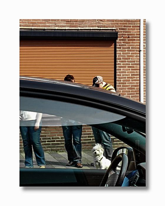 Street-fotografie ist auf den Hund gekommen