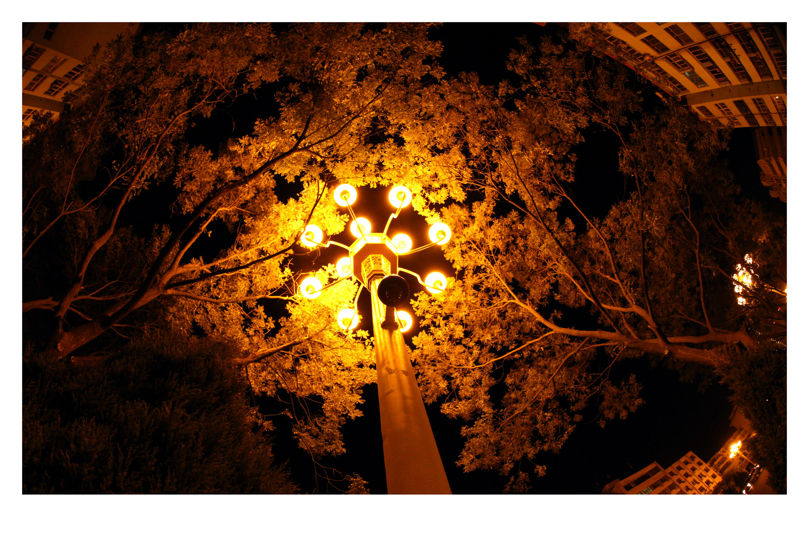 Street Lights in the Tree