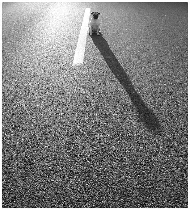Streetmops