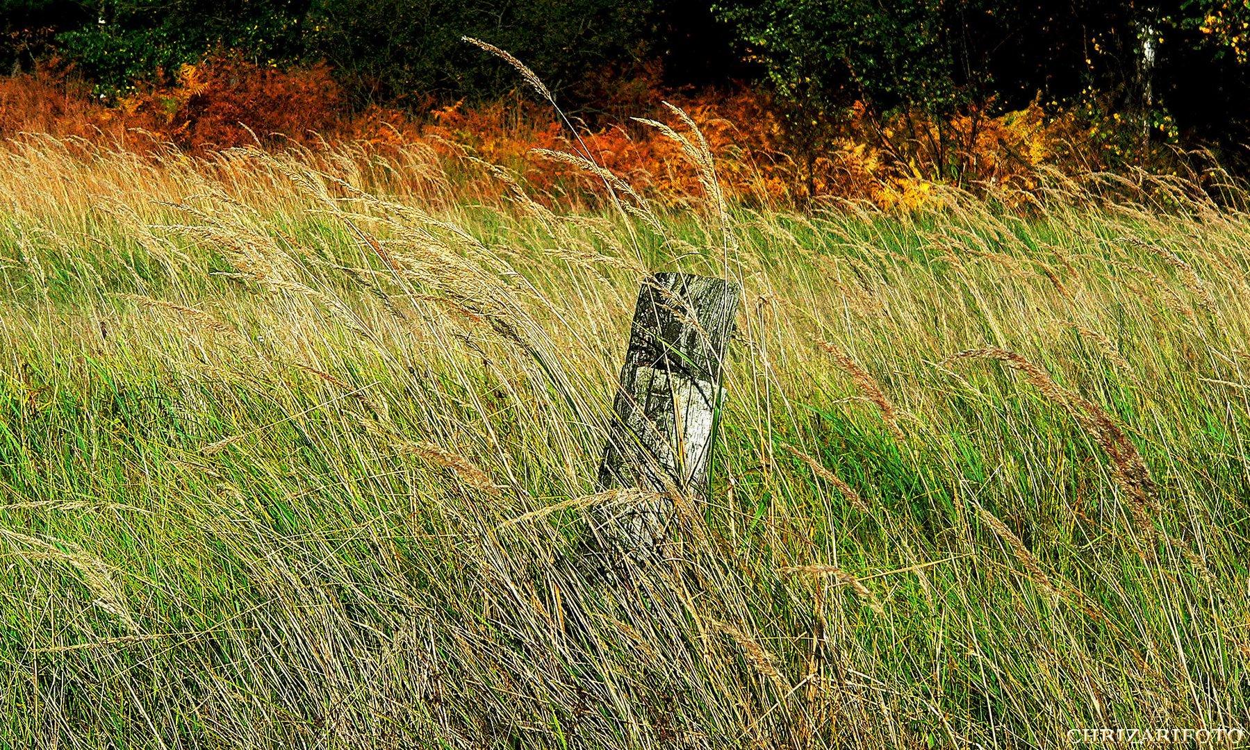 Streicheleinheit-Windspiel-Graslandschaft