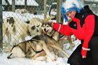 Streicheleinheiten nach der fantastischen Hundeschlittenfahrt