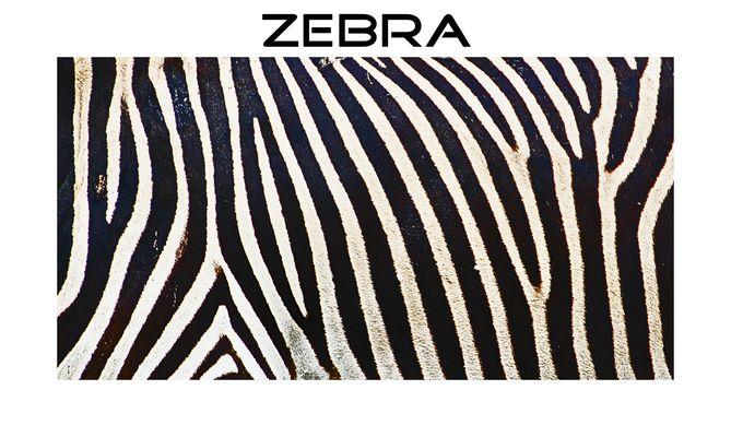 Streifen, Zebra, Streifen